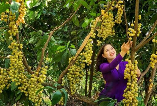 Mùa trái cây Cần Thơ