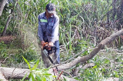 Cần mẫn với nghề cưa cây