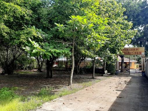 Đình Chánh Tân Kim: Mái đình cổ dưới những tán cây
