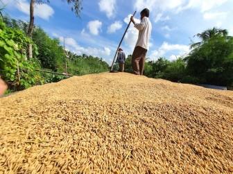 Giá thành sản xuất lúa hè thu ở ĐBSCL lên cao nhất kể từ năm 2018