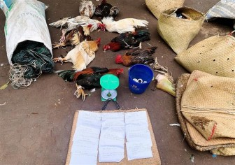 Bạc Liêu: Bắt quả tang 17 đối tượng đang tổ chức đá gà ăn tiền