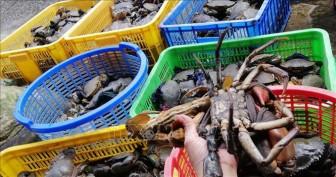 Giá nhiều loại hải sản ở Trà Vinh tăng cao