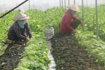 Dịch COVID-19: Tiền Giang dần chuyển sang trạng thái bình thường mới