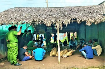 Cà Mau: Triệt phá trường gà sau trại tôm giống